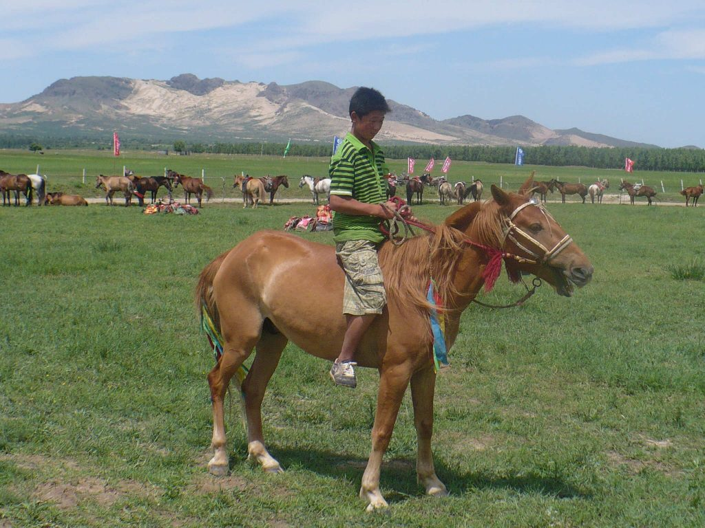 Mongolian horses